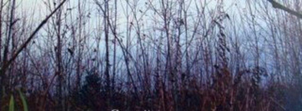 1413637720_landshafts_litso_banner