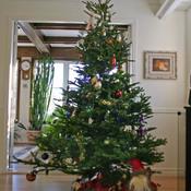 1306433539_christmastree_new_weekly_top