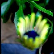 1306325363_blueflower_new_weekly_top