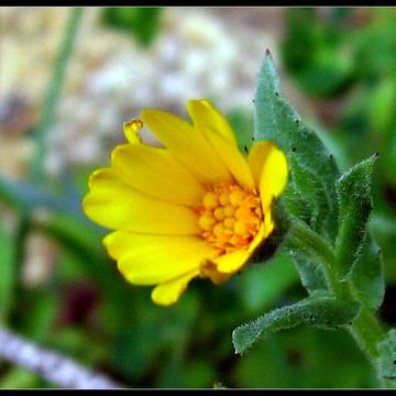 flowers. Андрей Загородний