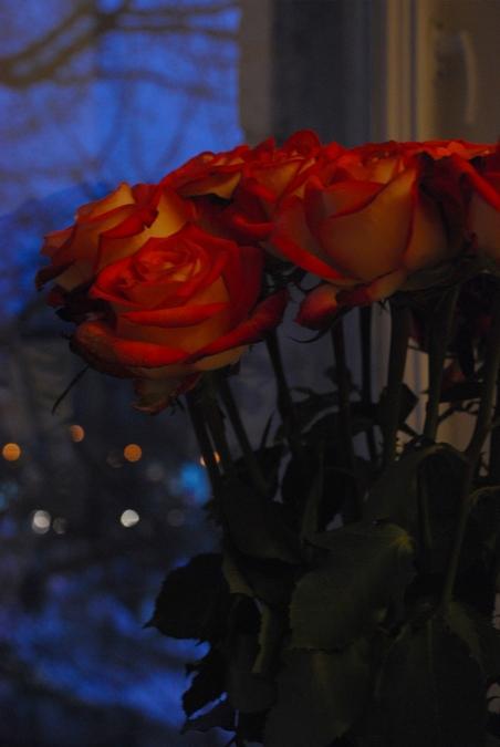 Розы и сумерки