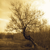 1314296578_tree_sepia_fall_new_weekly_top