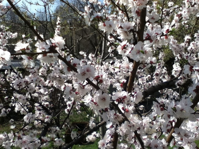 april 2012_3.jpg