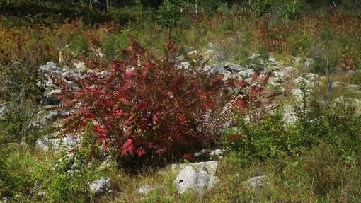 Белые камни, красные листья.JPG