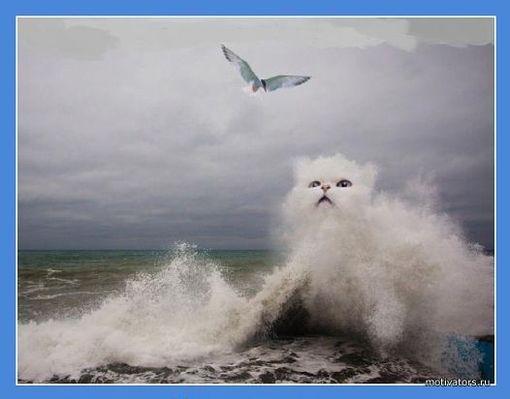 Кошка моря.jpg