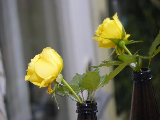 Одна жëлтая роза