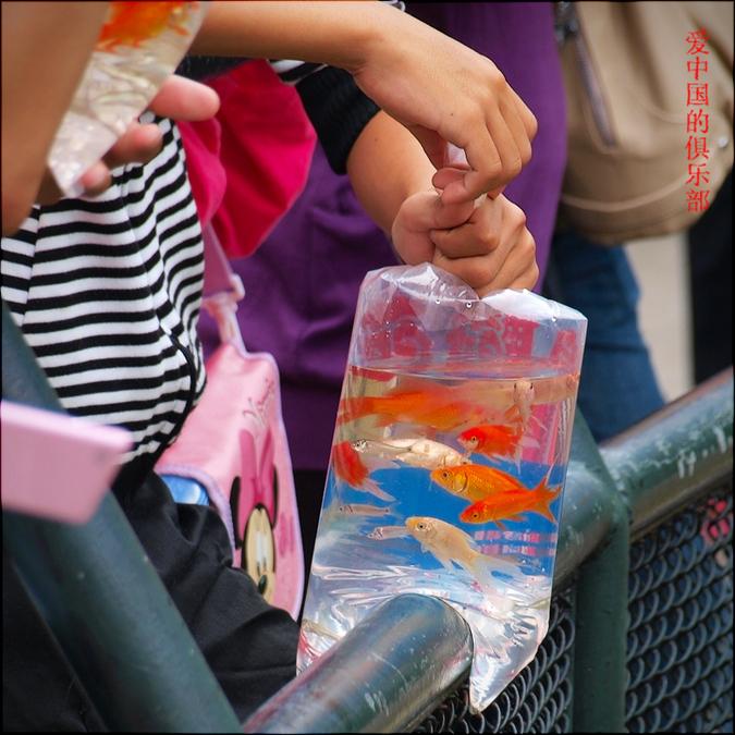 Мы на рыбок посмотрели, посмотрели, посмотрели и решили что берём :)