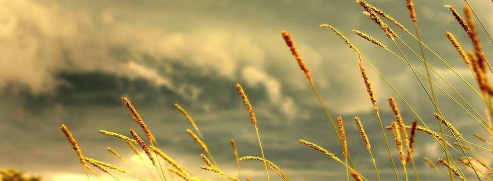 1374510394_field-of-love-nature-31000__1__banner