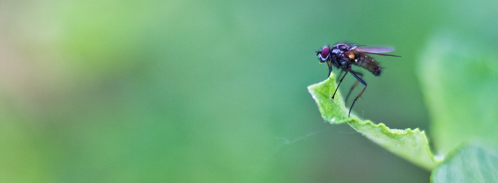 1379787373_the_fly_2_banner