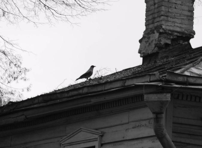 Ворона на кр..