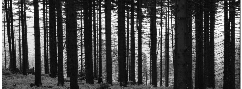 1389536806_dark_forest_2_by_brzcu_banner
