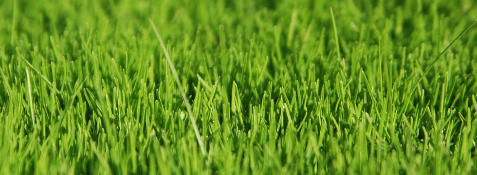 1390666496_green-grass-wallpaper_banner