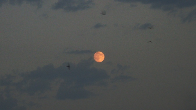 Луна, стрижи..