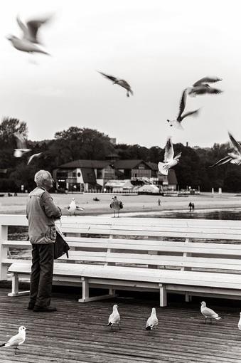 Сопот. Старик и чайки