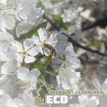 Eco Nickolay Fedorenko