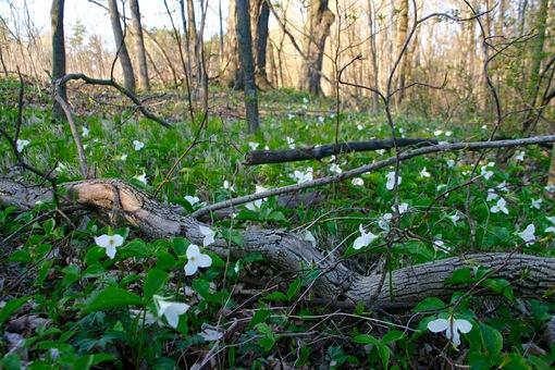 Откуда цветы знают, что пришла пора цвести?