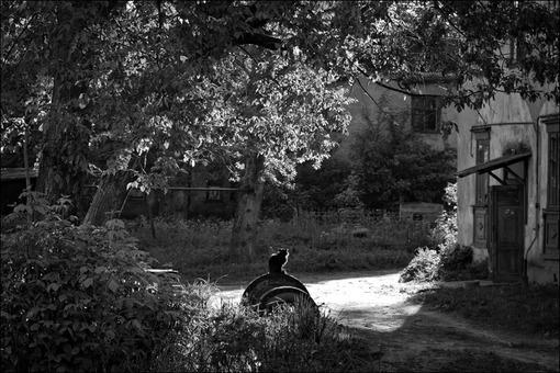 Утренняя чб картинка с силуэтом кошки во дворе в Озерках