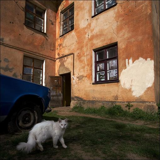 Цветная квадратная картинка с белой кошкой и пятном на стене дома в Озерках