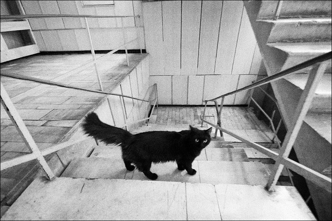 Лестничная чб картинка с черным котом в институте