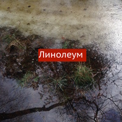 1541719630_kopiya_img_3332_new_weekly_top