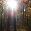 yav-forest