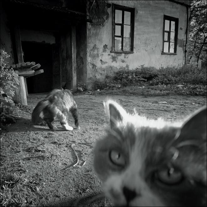 ЧБ квадратная картинка с кошачьей мордой в Озерках