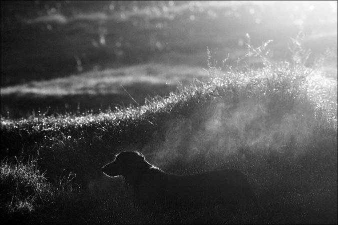 ЧБ утренняя картинка с силуэтом собаки в контровом свете