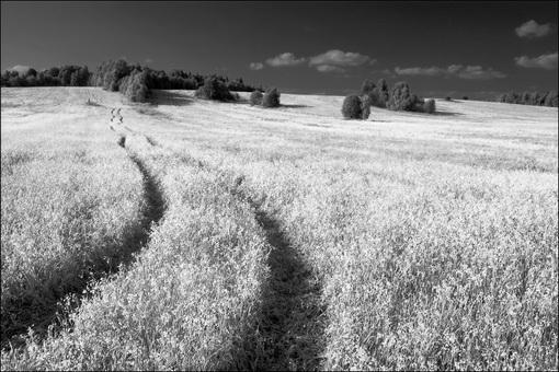 Летняя чб картинка с дорогой в поле