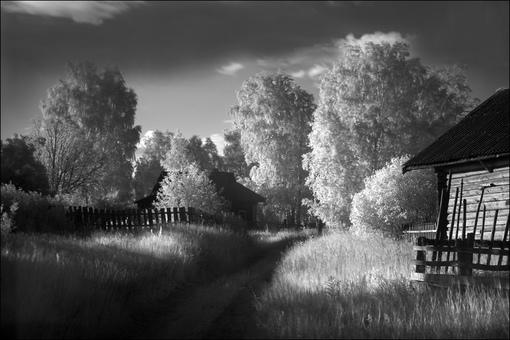Летняя ИК картинка с деревьями в деревне Перемут