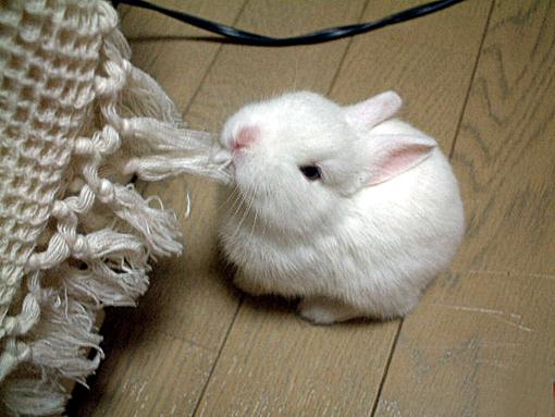 Кролик-убийца в юные годы)))