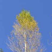 1306586277_fall_tree_new_weekly_top