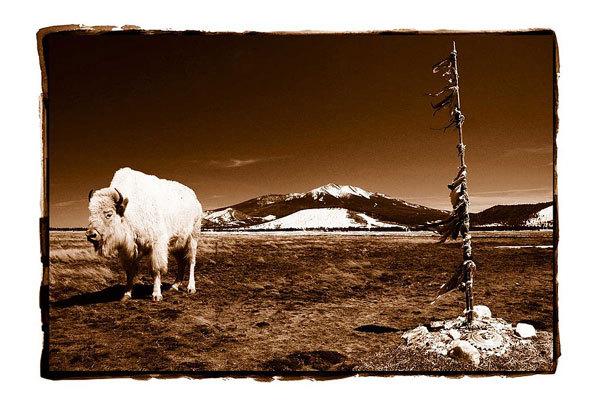 Белый Бизон
