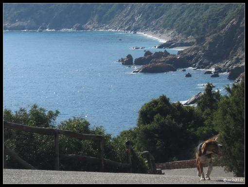собака и море.