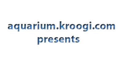1354714930_01_aquarium0_slideshow