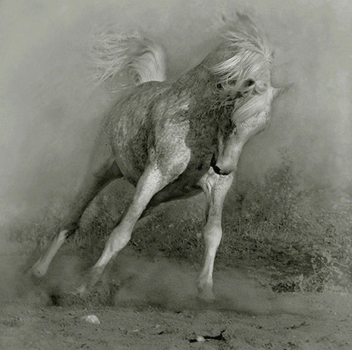 Белая_лошадь .