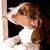 beagle67