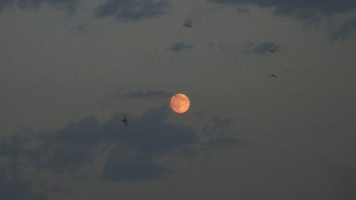 Луна, стрижи и облака