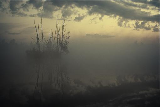Слегка цветная летняя болотная картинка с деревьями на островке в тумане